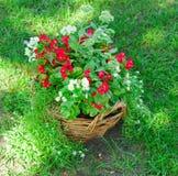 Beautiful basket of flowers Stock Image