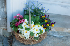 Beautiful basket of flowers Royalty Free Stock Image