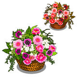 Beautiful basket of pink and white flowers. Vector. Illustration on white background in cartoon style Stock Photo