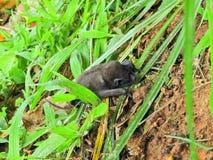 Beautiful bat in the wild royalty free stock photos
