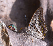 Beautiful battrefly. Beautiful butterfly in the waterfall,Thailand Stock Image
