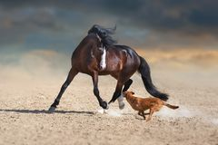 Beautiful bay horse play with dog