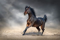 Beautiful bay horse Stock Photos