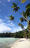 Beautiful beach. With palm trees on the Togean Islands in Indonesia Stock Photography