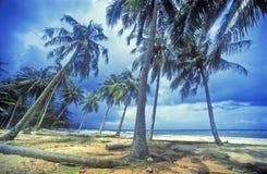 Beautiful beach. Palm Tree on beautiful  beach Stock Images