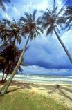 Beautiful beach. Palm Tree on beautiful  beach Stock Photography