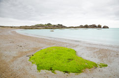 Beautiful beach with algae Stock Image
