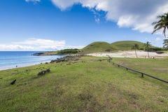 Anakena the beach of Rapa Nui. The beautiful beach of Anakena with the coconut trees and the moai of Ahu Nau Nau royalty free stock images
