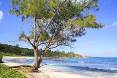 Beautiful beach Anse Cocos Royalty Free Stock Images