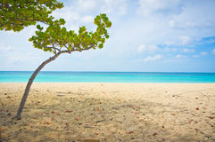 Beautiful beach in Aruba, Caribbean Islands Stock Photos