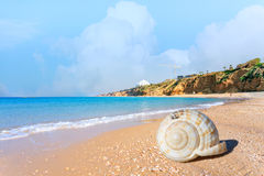 Beautiful beach in Ashkelon, Israel, with a large seashell Royalty Free Stock Images