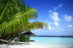 Beautiful Beach with blue sea & blue sky. Tropic Royalty Free Stock Images
