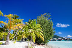 Beautiful beach on Bora Bora Royalty Free Stock Image