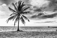 Beautiful beach with coconut Royalty Free Stock Photos