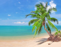 Beautiful beach with coconut palm and sea Stock Photography