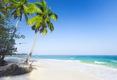 Beautiful beach with coconut palm and sea Royalty Free Stock Photo