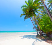 Beautiful beach with coconut palm and sea Stock Image