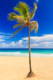 Beautiful beach in Cuba Royalty Free Stock Photo