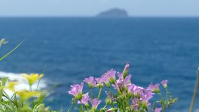 Beautiful beach with deep blue water and light blue sky and nice flower stock footage