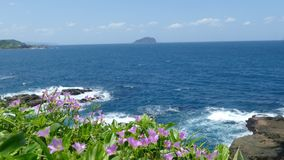 Beautiful beach with deep blue water and light blue sky and nice flower stock video footage