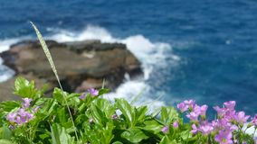 Beautiful beach with deep blue water and light blue sky and nice flower stock video