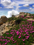 Beautiful beach with flowers, Algarve, Portugal stock photo