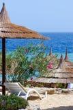 Beautiful beach, flowers sunbed umbrellas on sea background Stock Photo
