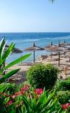 Beautiful beach, flowers sunbed umbrellas on sea background Royalty Free Stock Photos