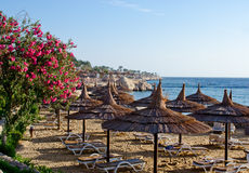 Beautiful beach, flowers sunbed umbrellas on sea background Royalty Free Stock Photo