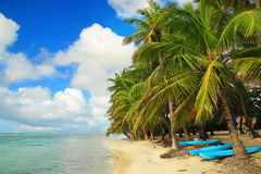 Beautiful beach in Guadeloupe, Caribbean Islands Royalty Free Stock Photo