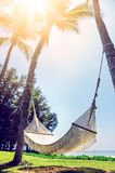 Beautiful beach.  Hammock between two palm trees on the beach. H Royalty Free Stock Image