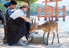 Contact with nature in the center of Itsukushima