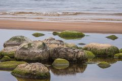 A beautiful beach landscape with a green moss covered stones. Algae growing on seaside rocks. Colorful autumn landscape at the Baltic Sea Royalty Free Stock Images