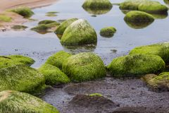 A beautiful beach landscape with a green moss covered stones. Algae growing on seaside rocks. Colorful autumn landscape at the Baltic Sea Royalty Free Stock Photography
