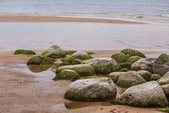 A beautiful beach landscape with a green moss covered stones. Algae growing on seaside rocks. Colorful autumn landscape at the Baltic Sea Stock Photos