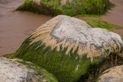 A beautiful beach landscape with a green moss covered stones. Algae growing on seaside rocks. Stock Images