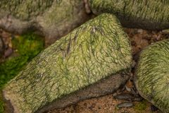 A beautiful beach landscape with a green moss covered stones. Algae growing on seaside rocks. Stock Image