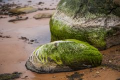 A beautiful beach landscape with a green moss covered stones. Algae growing on seaside rocks. Colorful autumn landscape at the Baltic Sea Royalty Free Stock Image