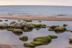 A beautiful beach landscape with a green moss covered stones. Algae growing on seaside rocks. Colorful autumn landscape at the Baltic Sea Royalty Free Stock Photo