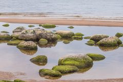 A beautiful beach landscape with a green moss covered stones. Algae growing on seaside rocks. Colorful autumn landscape at the Baltic Sea Stock Photography