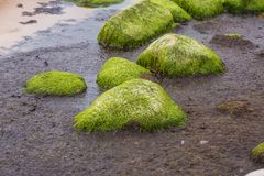 A beautiful beach landscape with a green moss covered stones. Algae growing on seaside rocks. Colorful autumn landscape at the Baltic Sea Royalty Free Stock Photos