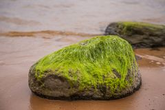 A beautiful beach landscape with a green moss covered stones. Algae growing on seaside rocks. Colorful autumn landscape at the Baltic Sea Stock Image