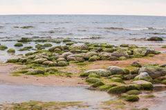 A beautiful beach landscape with a green moss covered stones. Algae growing on seaside rocks. Colorful autumn landscape at the Baltic Sea Stock Photo