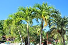 Beautiful beach lined with palm trees Stock Photography