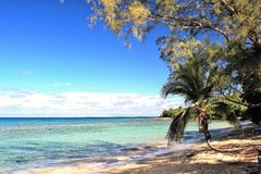 Beautiful beach lined with palm trees Royalty Free Stock Photo