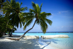Beautiful beach in the Maldives Stock Image