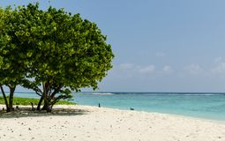 Beautiful beach on Maldives with tropical trees, white sand and blue sky. Holidays destination. Maldives - November, 2017: Amazing beach on Maldives with white Royalty Free Stock Photo