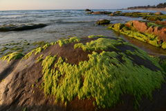 Beautiful beach with moss in Binh Thuan, Vietnam Stock Photos