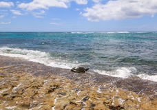 Beautiful beach on Oahu North Shore Hawaii & x28;Turtle beach& x29; Stock Photo