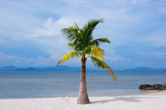 Beautiful beach with a palm. Blue sky with white cloud Stock Image